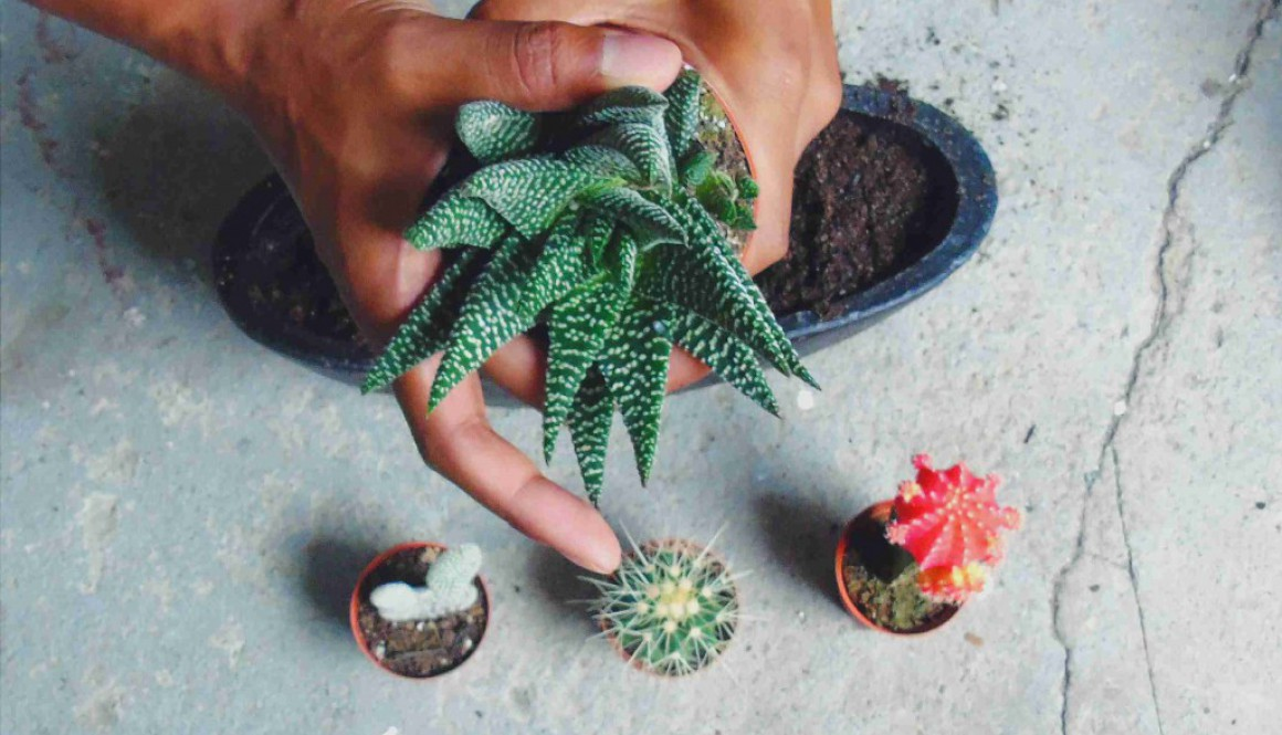 DIY mini succulent/cacti garden