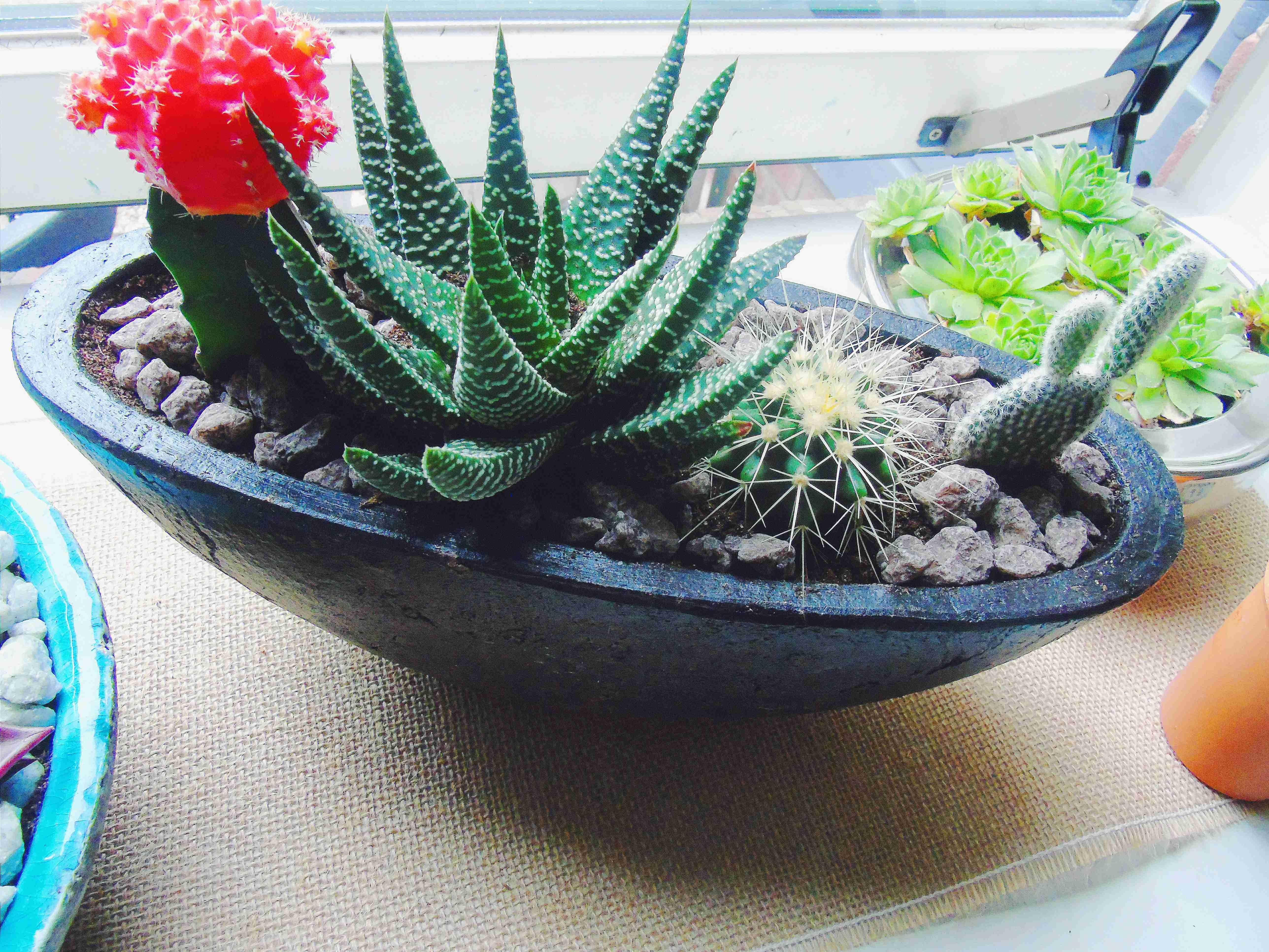 Mini succulent garden.