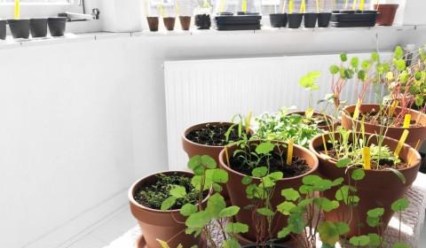 Gardening Adventures #2 – New Seeds