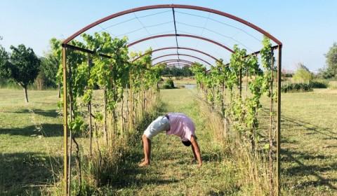 Summer Yoga Retreat 2017